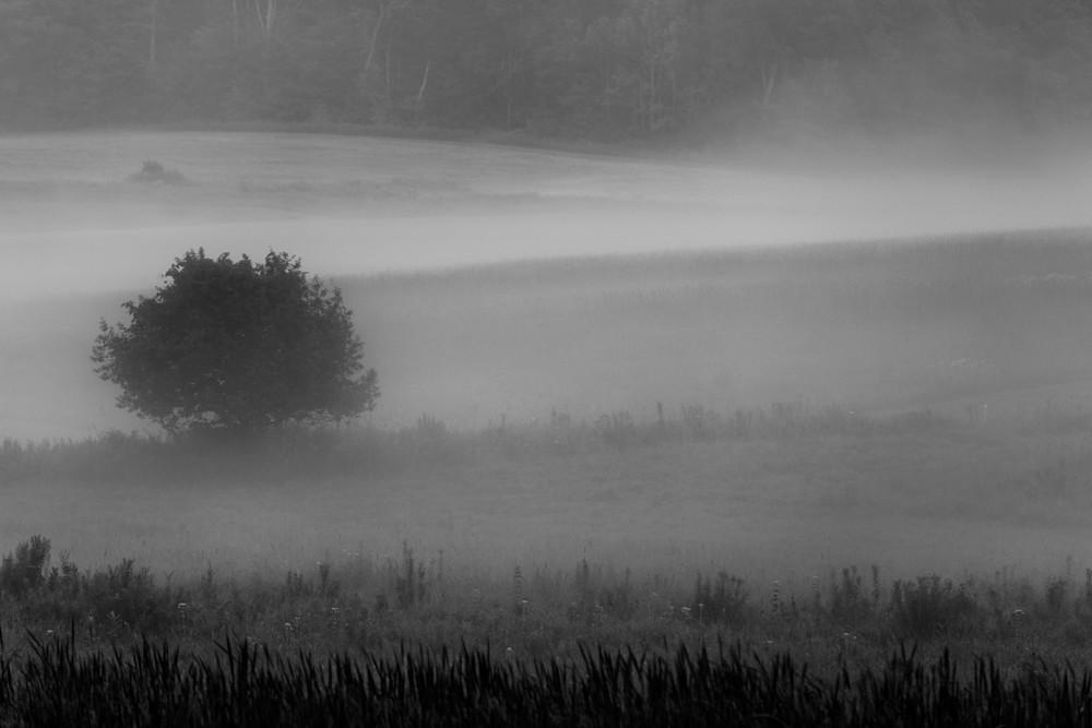 Gently Through The Mist