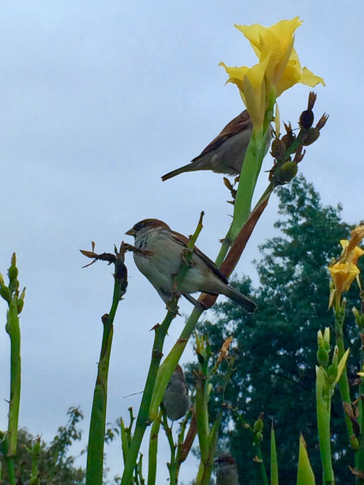 birds_1_dc