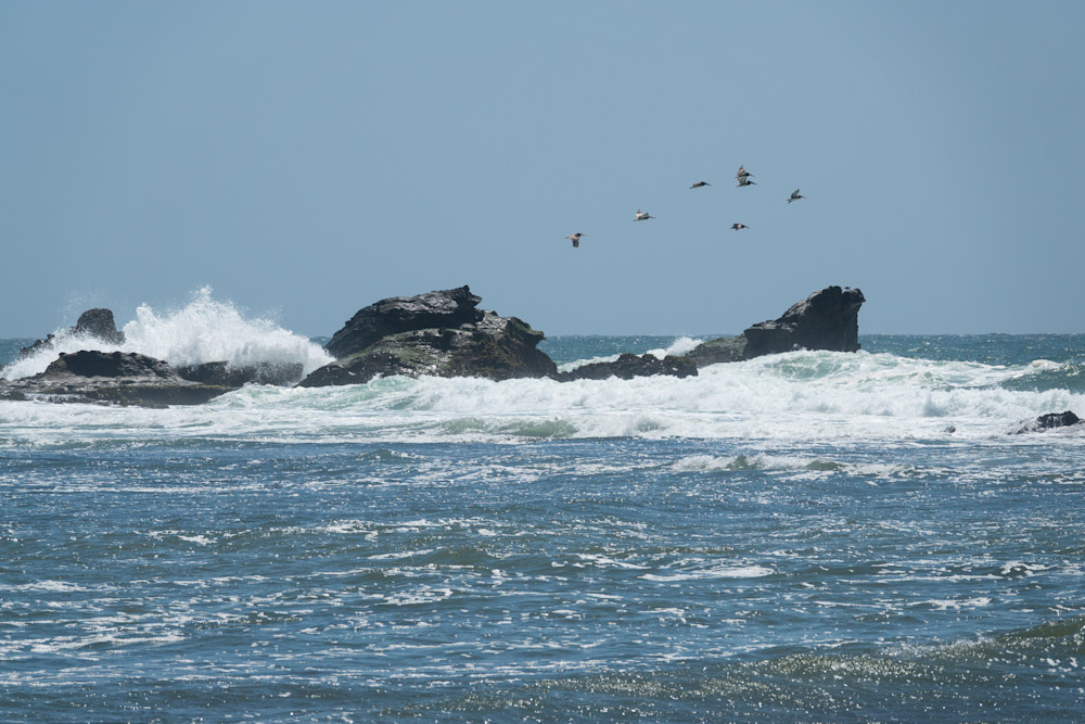 Pelicans over a pounding surf - shop prints | Closer Views