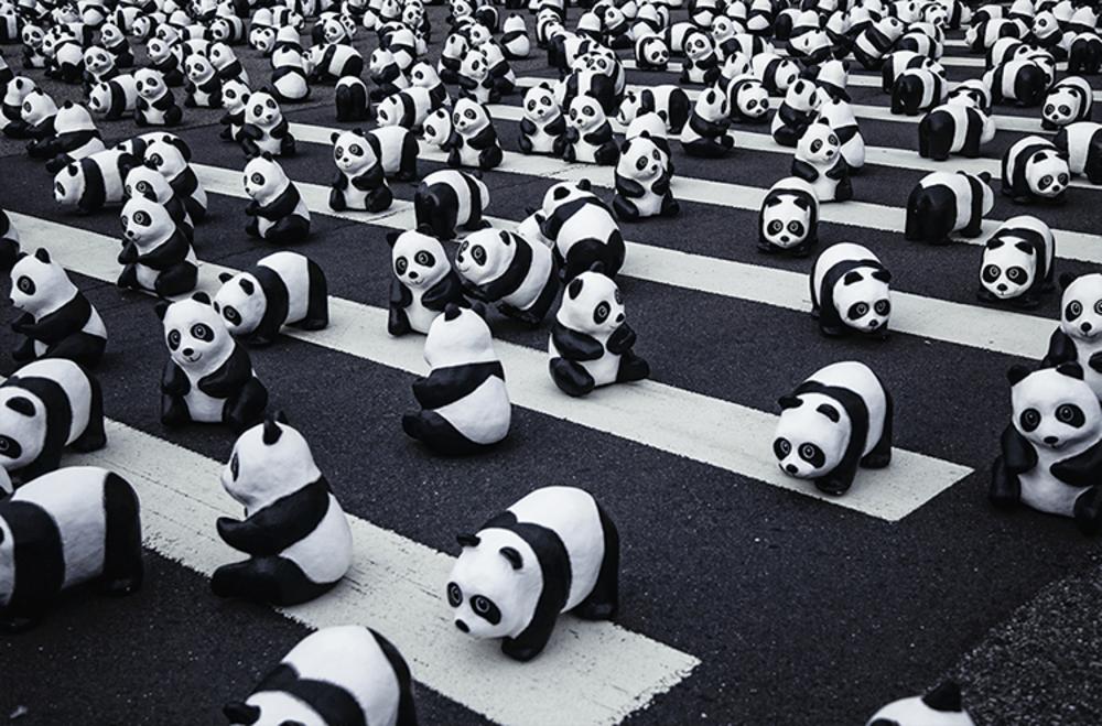 Pandas | Beperkte oplage kunst print - Hanson Mao | A-Galleria
