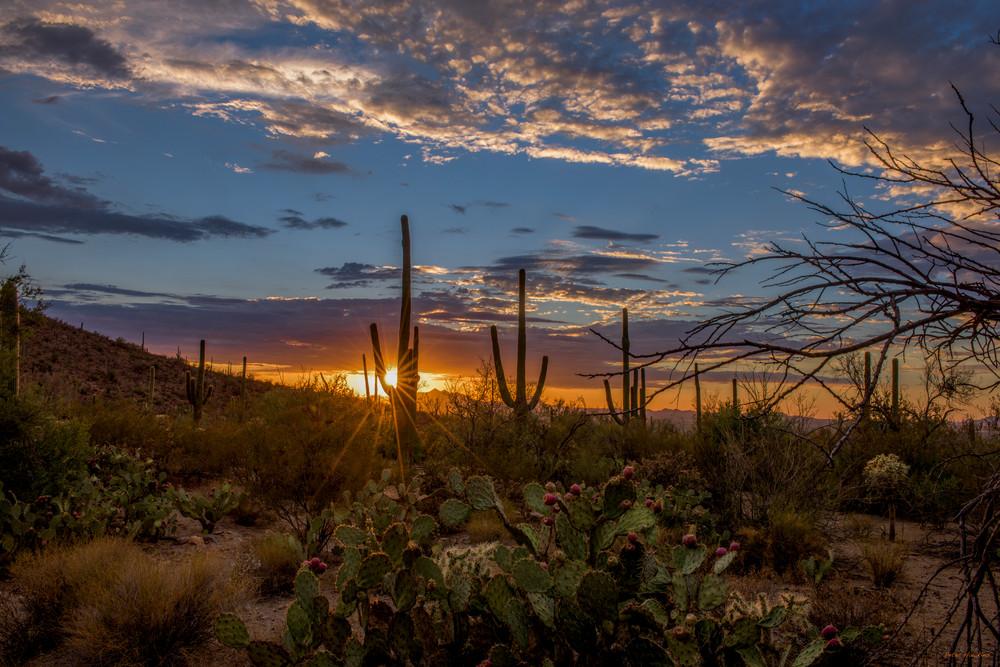 DP603 Summer Sunset