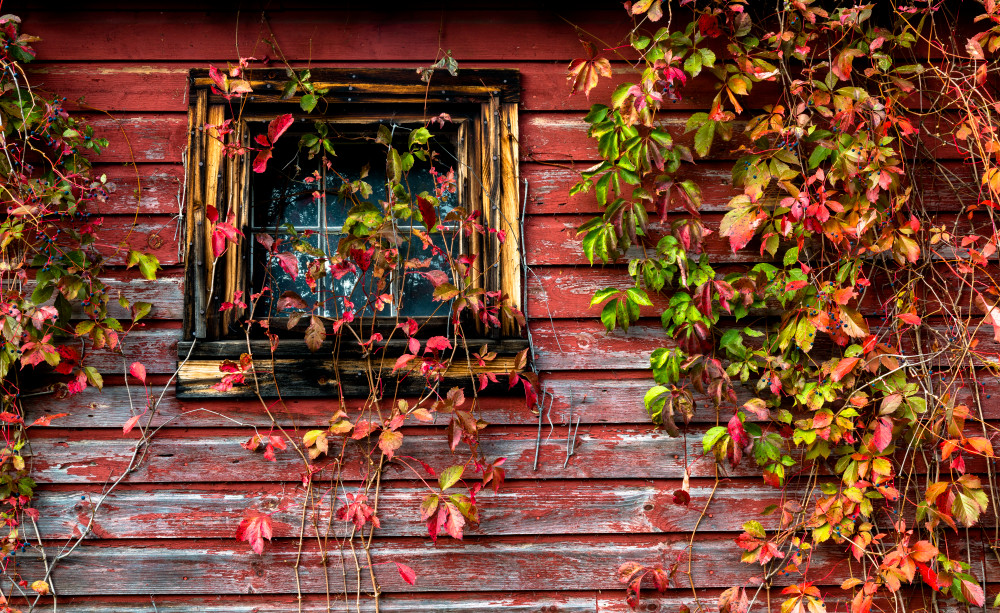 Rustic Barn 1 Photography Art | Gale Ensign Photography