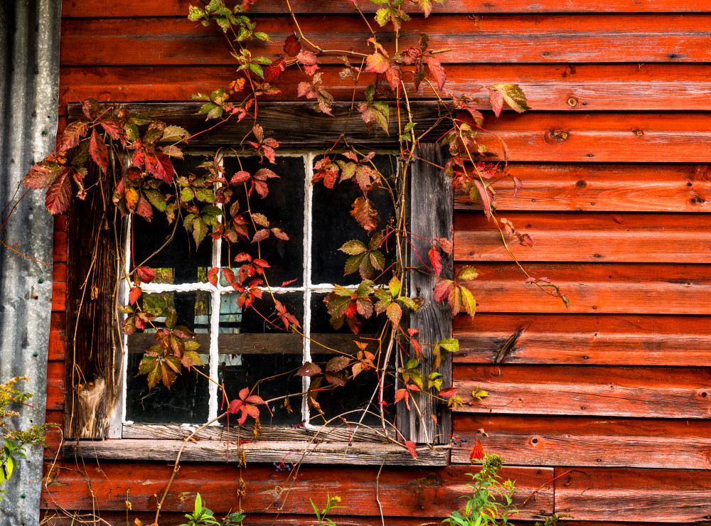 Rustic Barn 3 Photography Art | Gale Ensign Photography