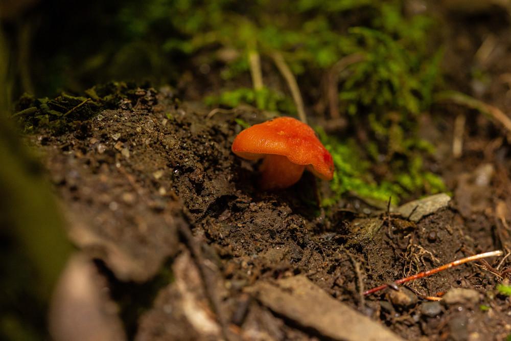 The Mushroom Chronicles55