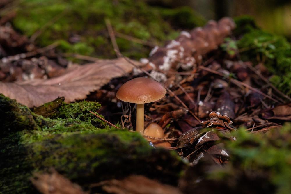 The Mushroom Chronicles 13