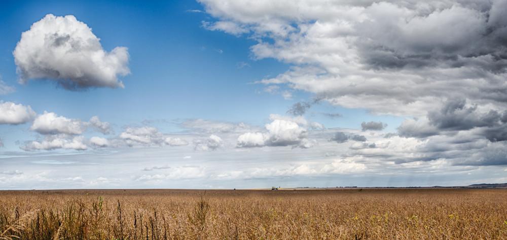 Argentine Soybean Fields Photography Art | Nathan Larson Photography, LLC