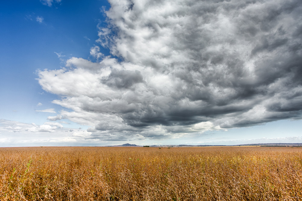 The Plains Of Argentina Habas De Soja Photography Art | Nathan Larson Photography, LLC