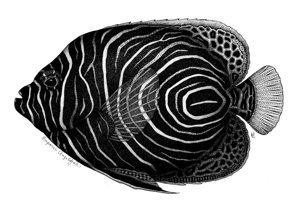 Emporer Angelfish