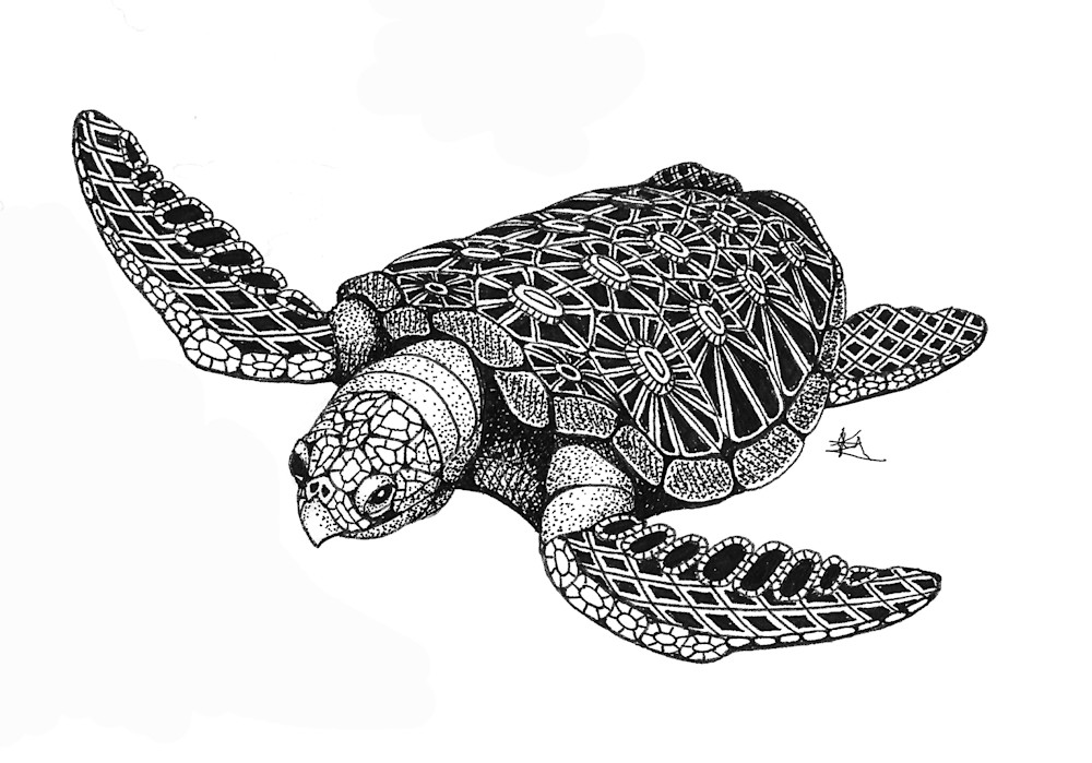Sea Turtle (top)