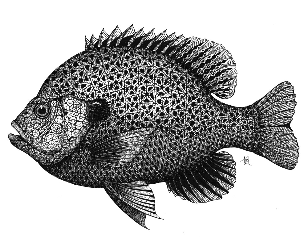 Sunnie (Bluegill Sunfish)