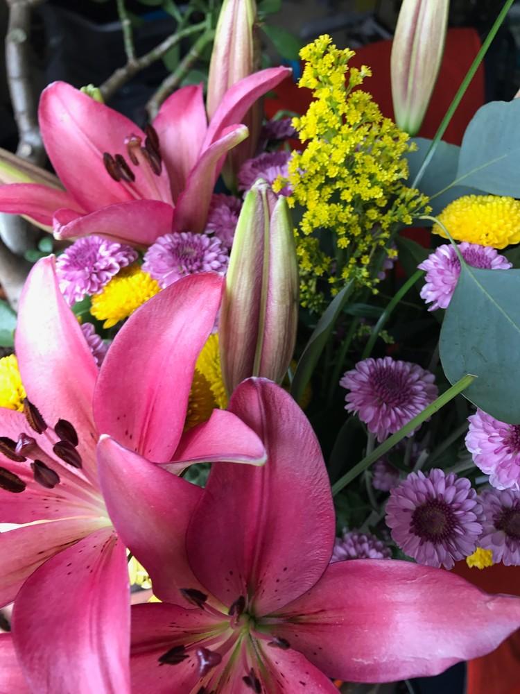 fuchsia flower power2