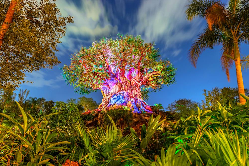 Nighttime at Animal Kingdom - Disney World Wall Art | William Drew Photography
