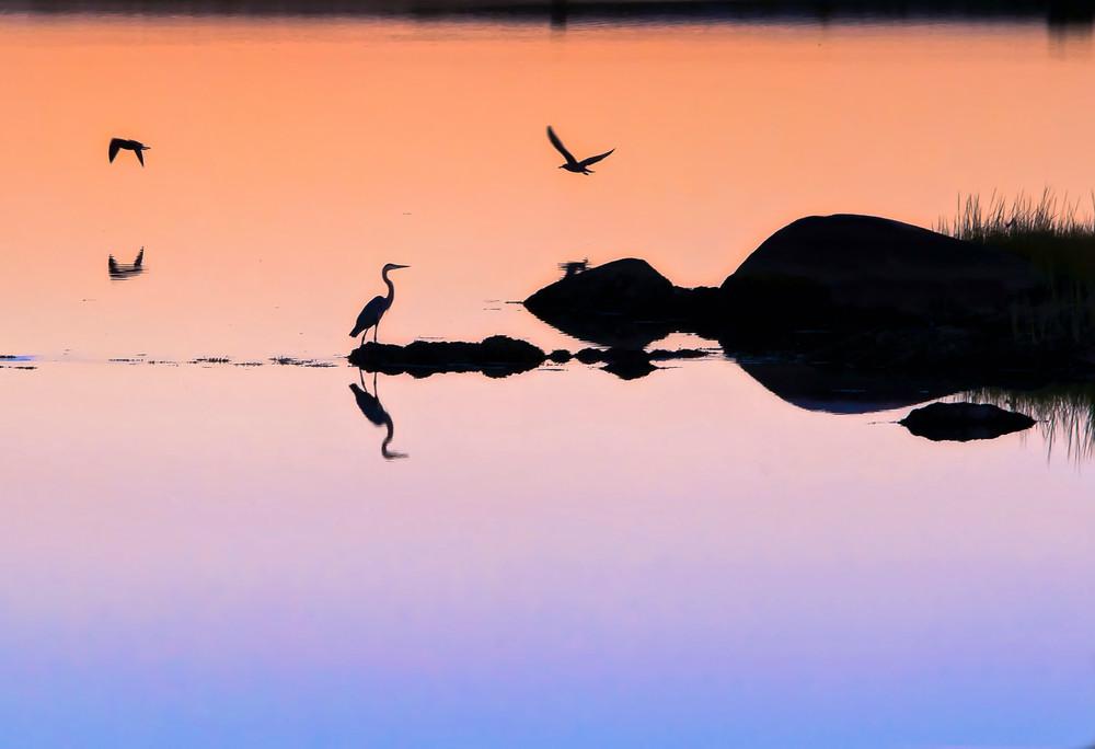 Stonewall Pond Egret
