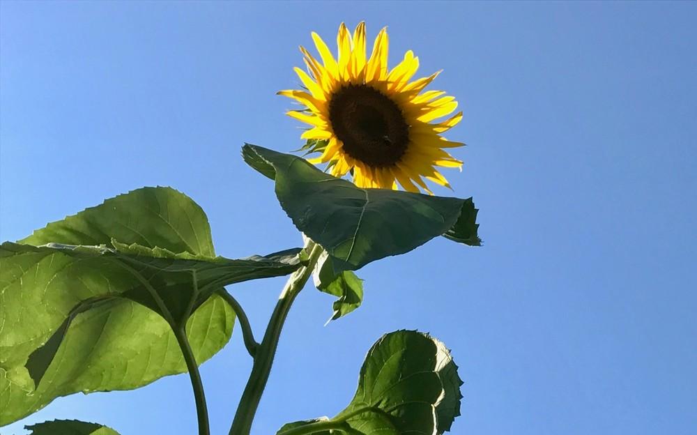 yellow flower power2
