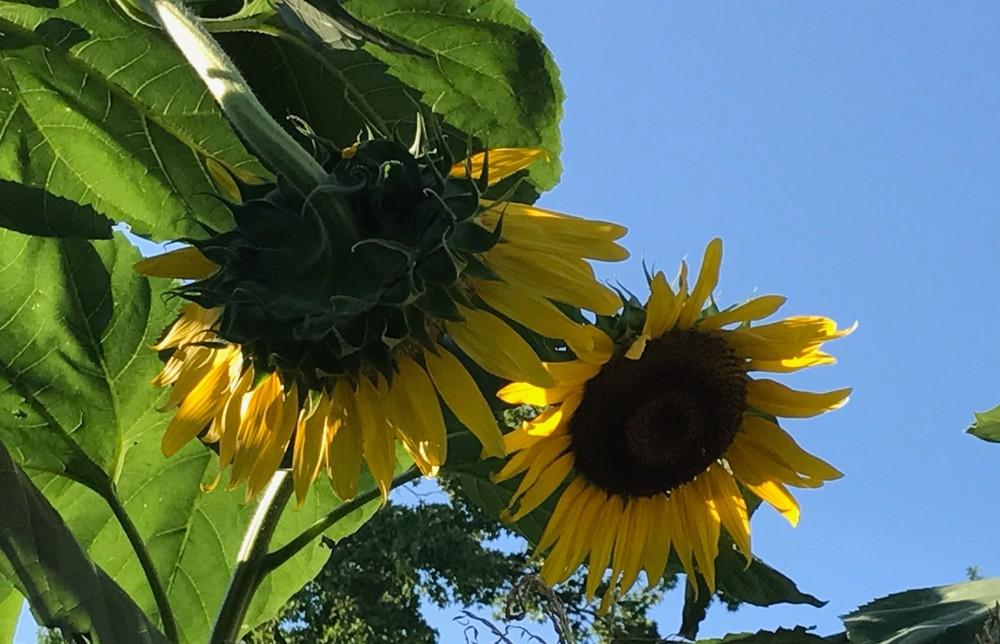 yellow flower power3