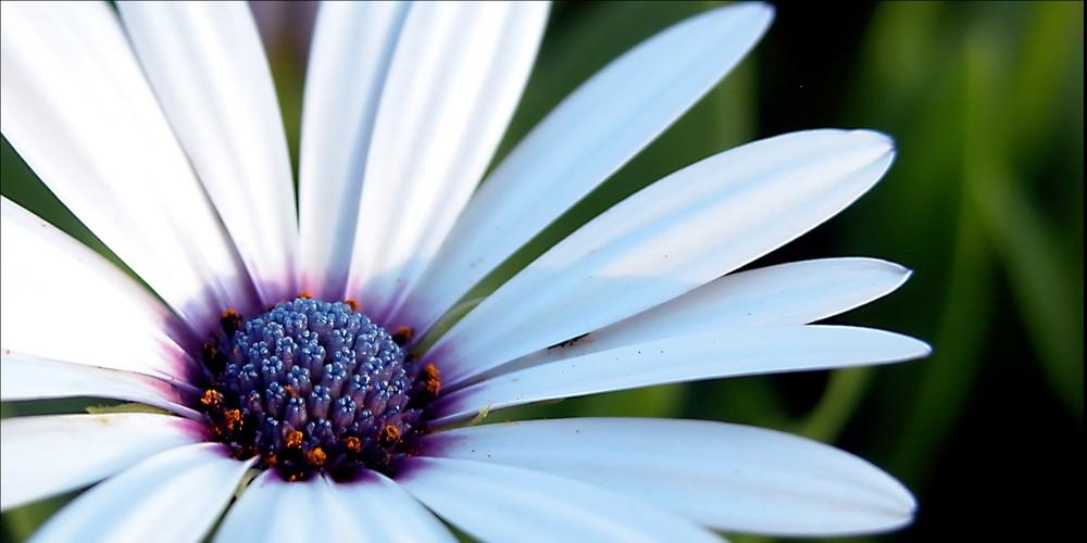 Mission Flower