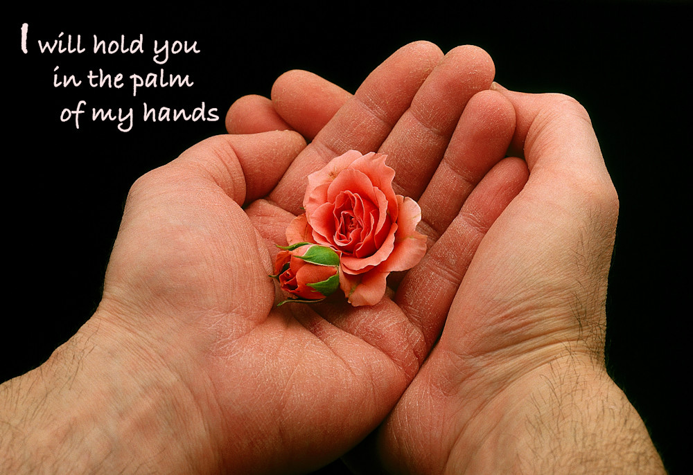 Sheltered Souls - hands cupping roses - shop prints | Closer Views