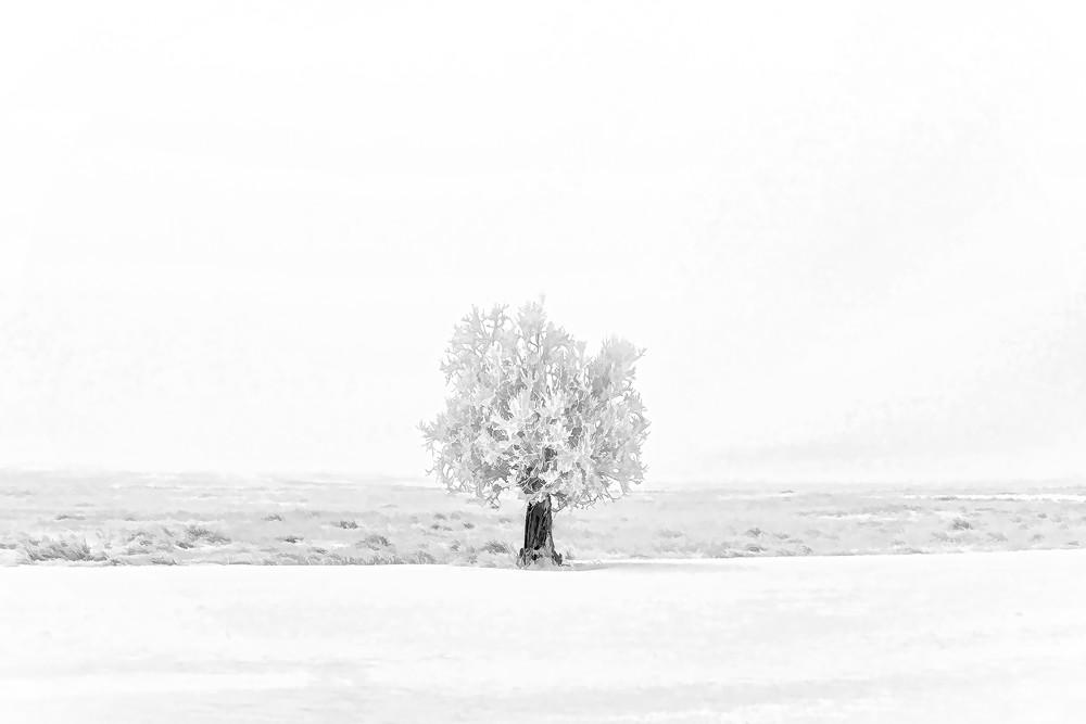Frozen Photography Art | Craig Edwards Fine Art Images
