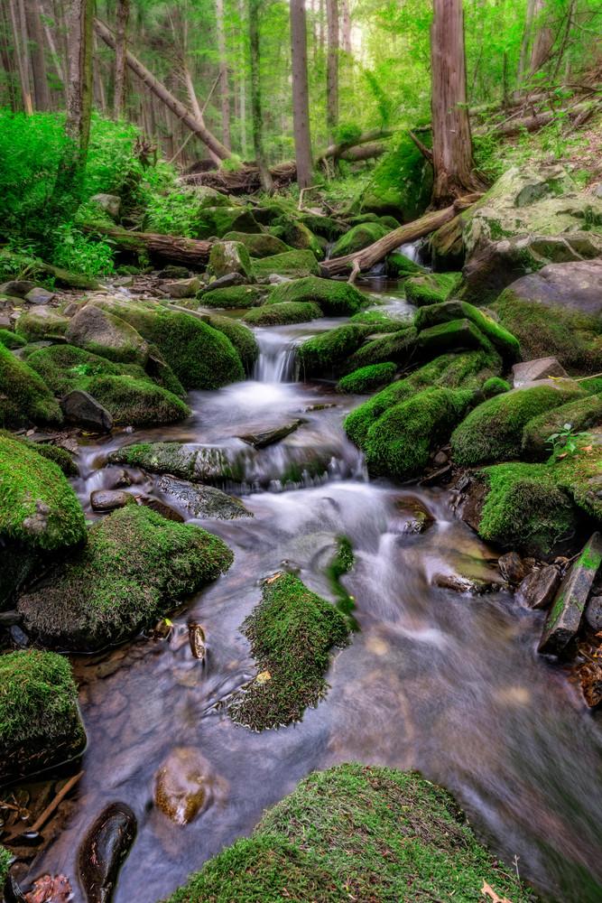 Little Bush Kill, Bushkill Falls State Park, Pennsylvania. By Rick Berk