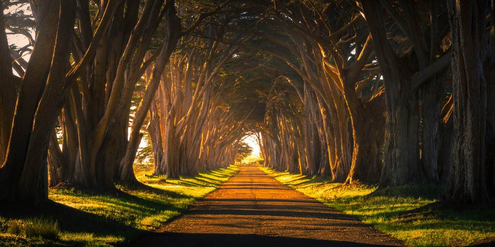 Cypress Tree Tunnel Pano Photography Art   Brad Scott Visuals