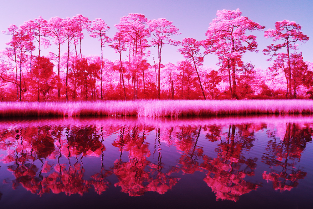 Gulf Reflections