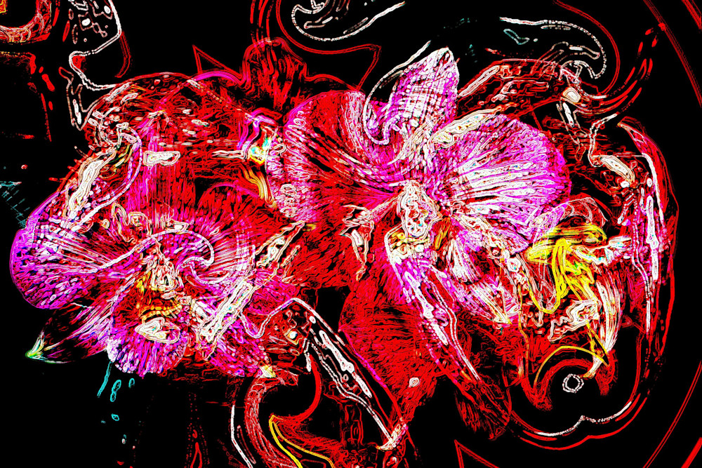 Morbid twin Orchids | Mark Humes Gallery