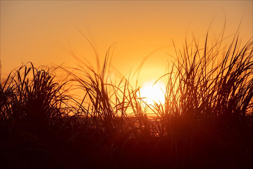 Beach Grass and Sunset