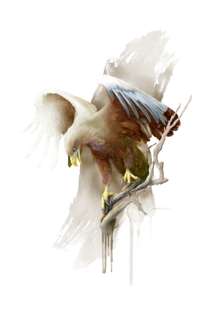 Magnificent White-Tailed Eagle Artwork