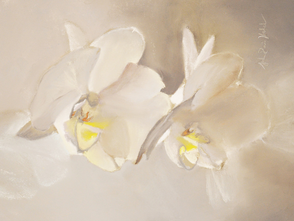 The White Orchids