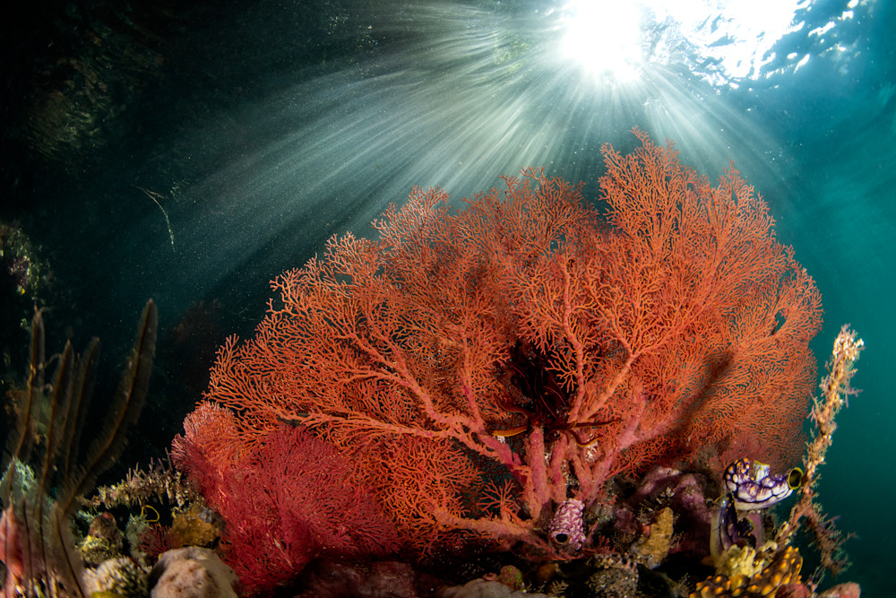 Flaming Bush fine art underwater photograph for sale