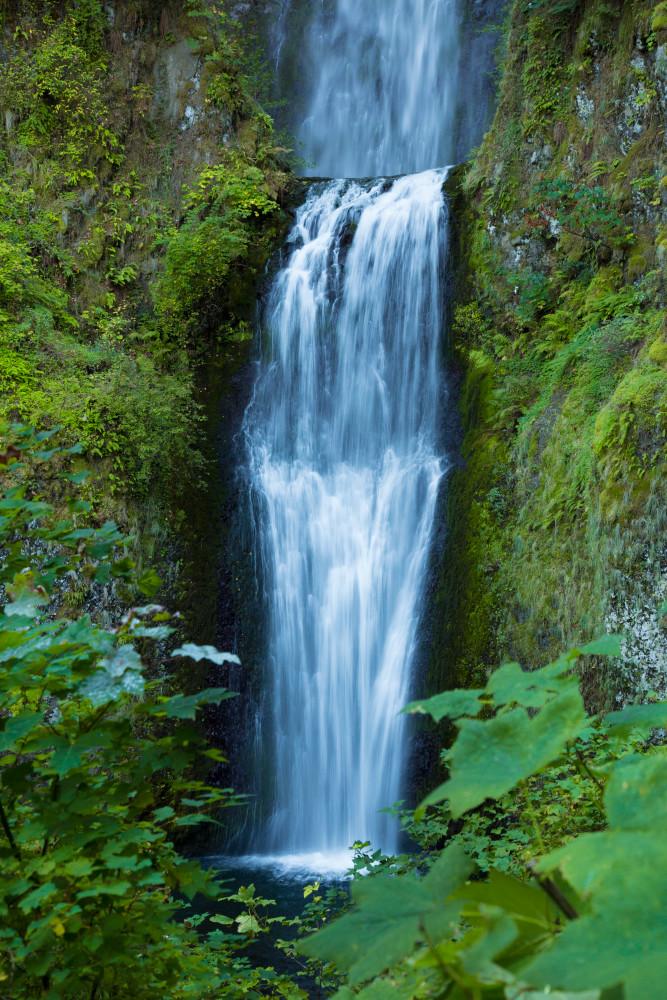Multnomah Falls Greenery