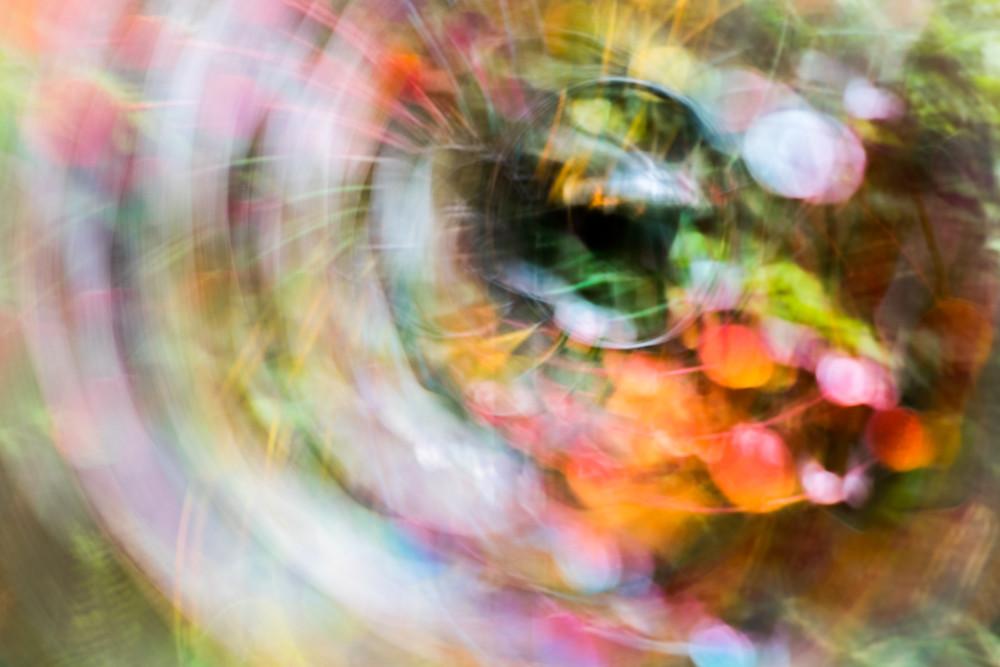 Oculus Photography Art   allysonmagda