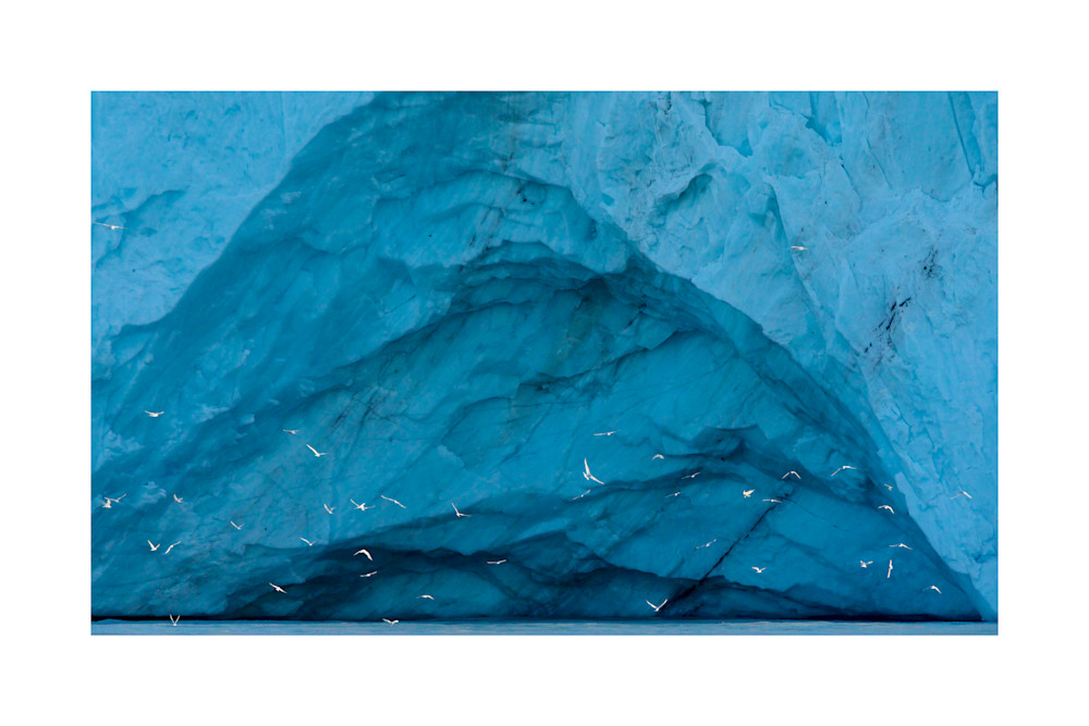 Photo of Terns foraging along glacier in Antarctica.