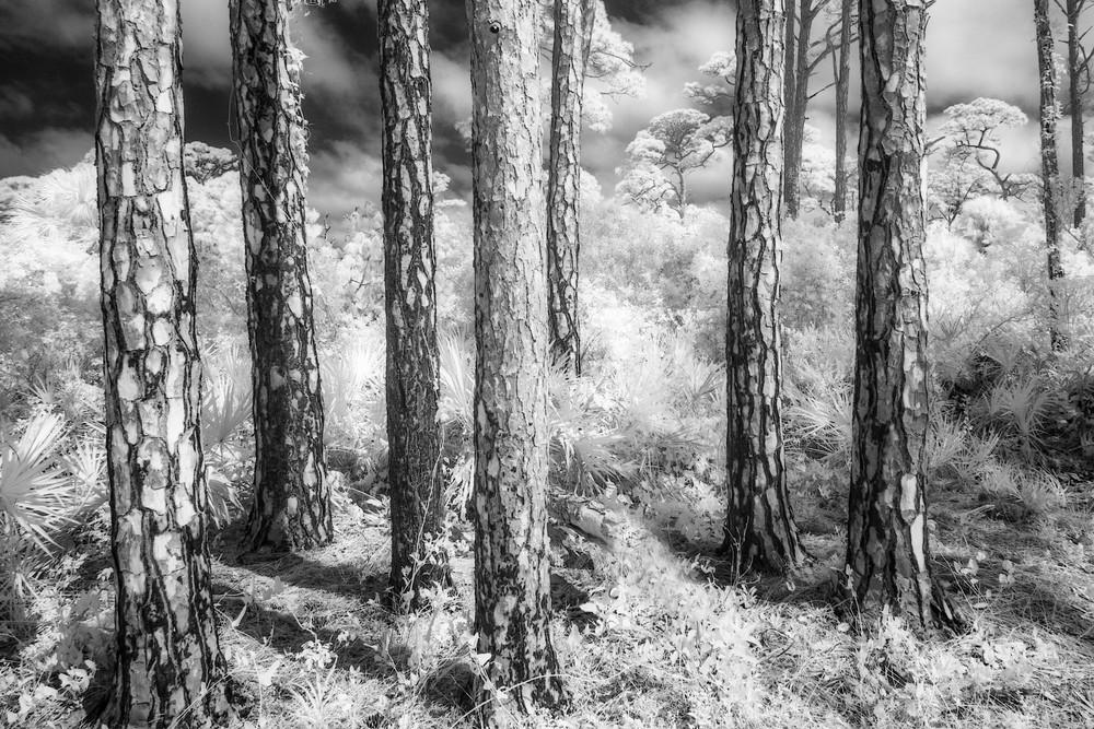 Pine Patterns
