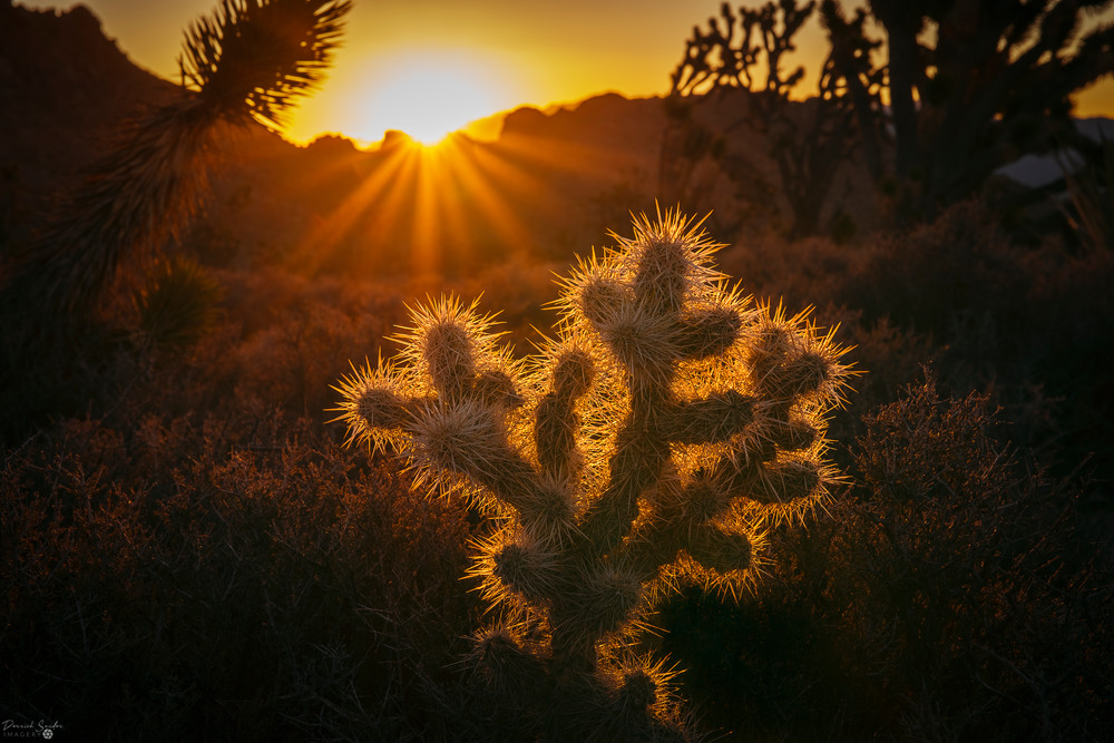 Cactus Sunrise Photography Art   Derrick Snider Imagery