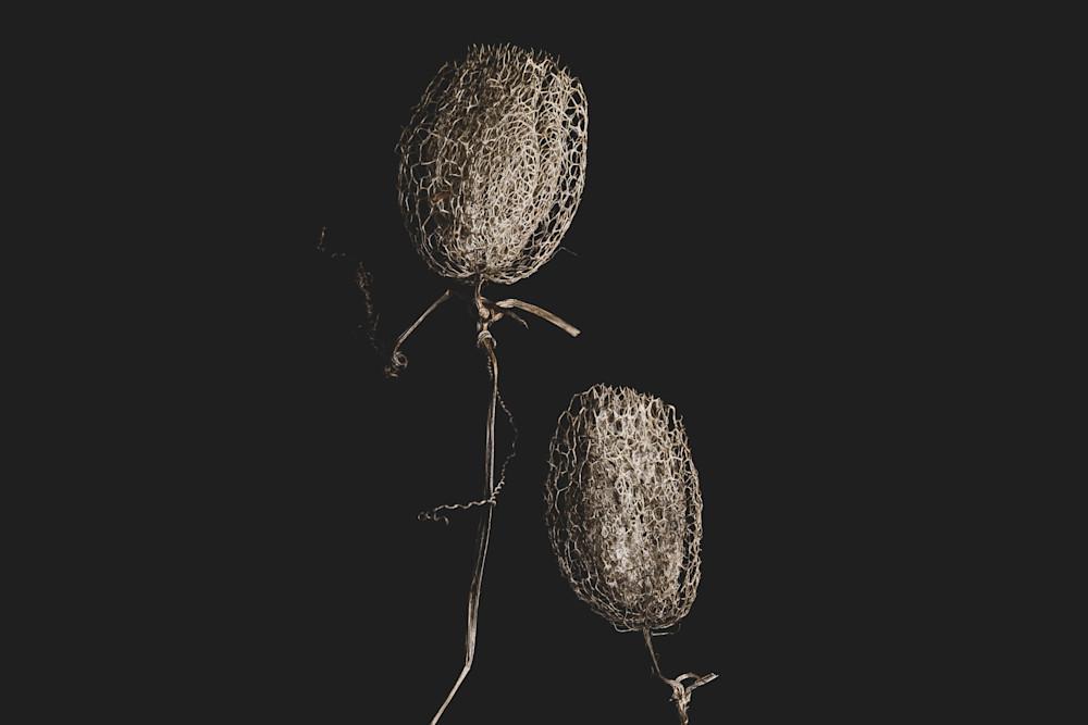 The Flower I