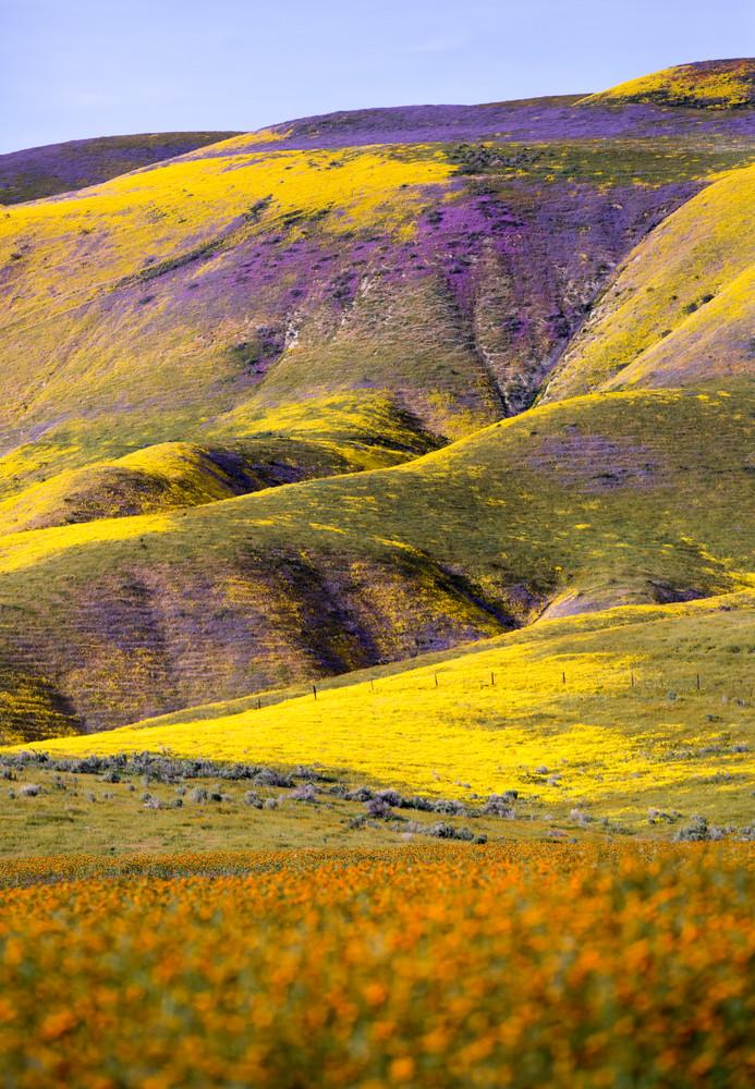 SAN ANDREAS FLOWERBURST