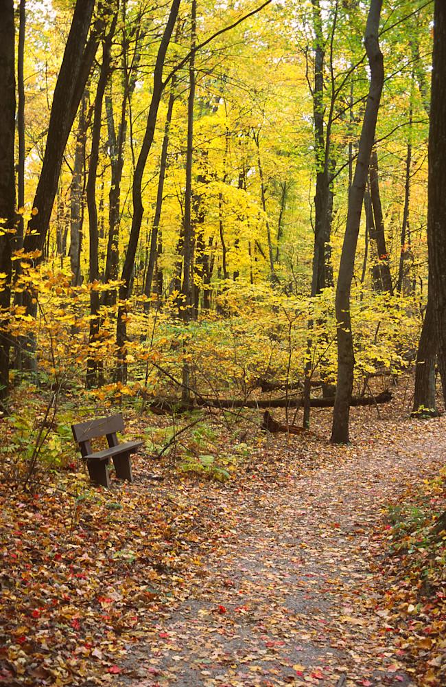Woodland Respite photograph for sale as Fine Art.