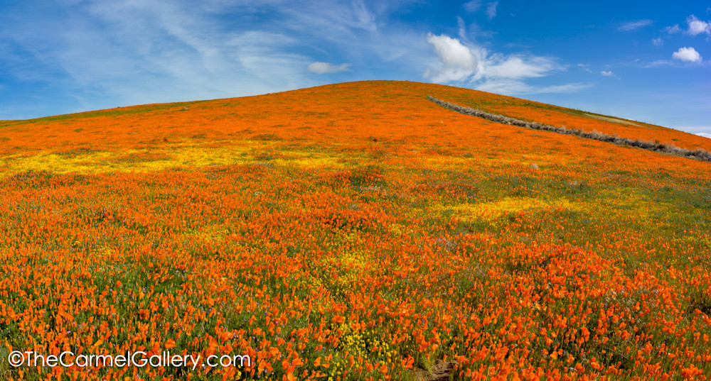 California Superbloom Art | The Carmel Gallery