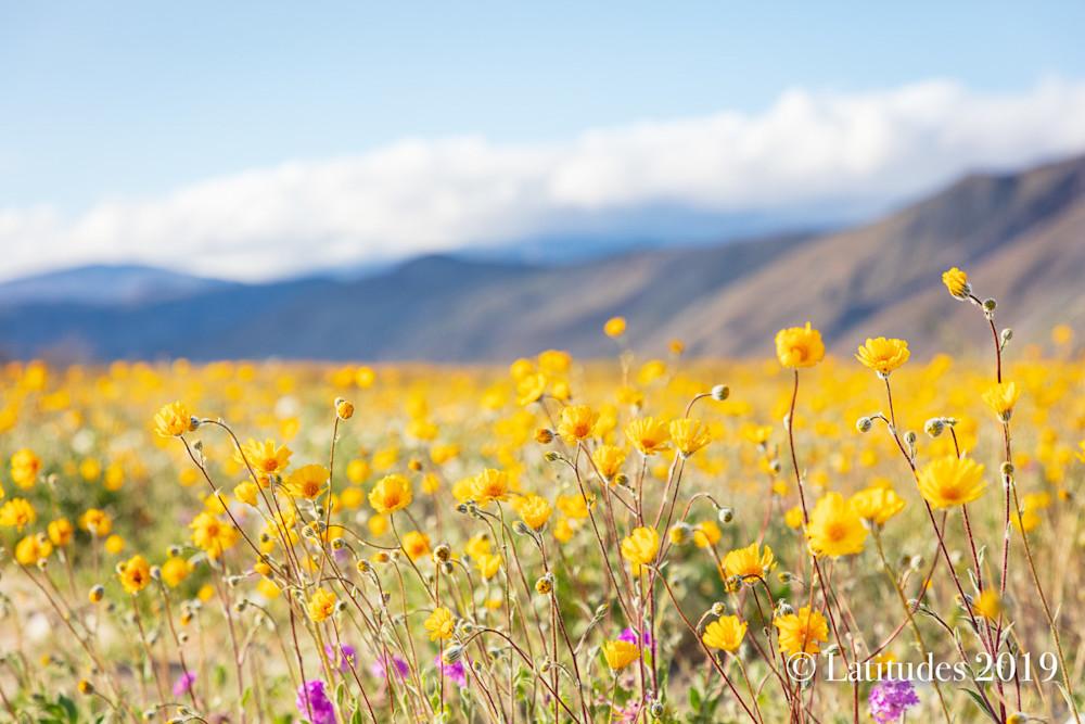 """""""Desert Bloom"""""""