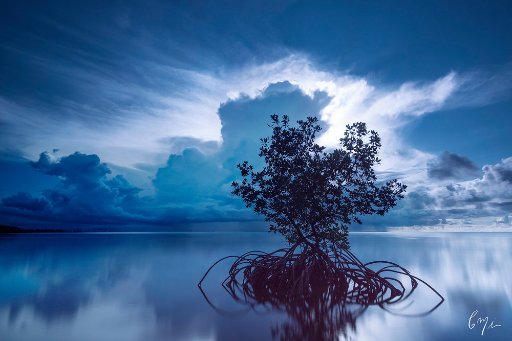 Constance Mier Photography - fine art photography of Florida waterscapes