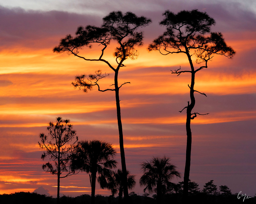 Constance Mier Photography - fine art nature scenes of Florida's beautiful landscapes