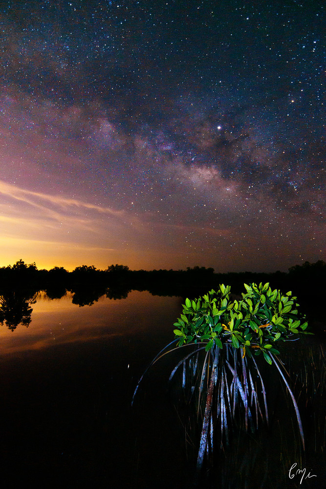 Constance Mier Photography - milky way in the night sky shot from a florida mangrove swamp