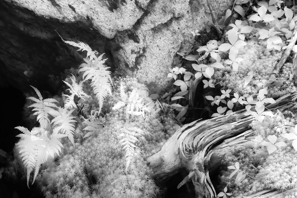 Ferns and Log