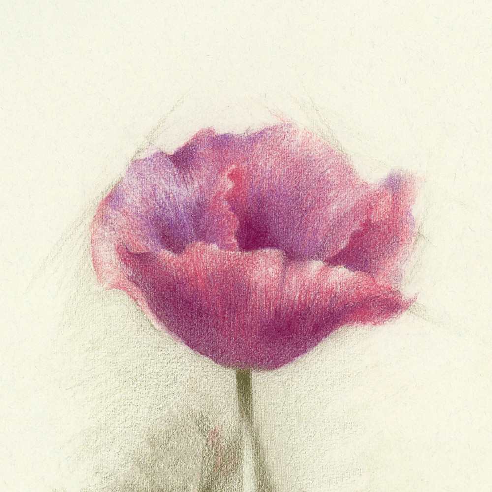 Poppy, Purple Red Art | Cristina Goia