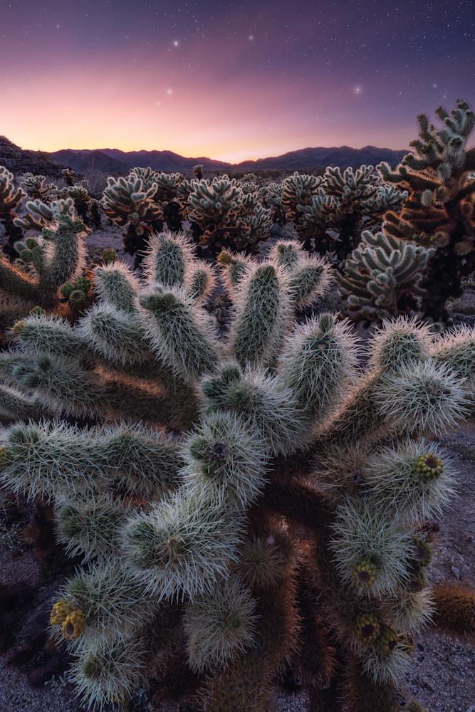 'Cholla Gardens & Star Dust' Photograph by Jess Santos for sale as Fine Art