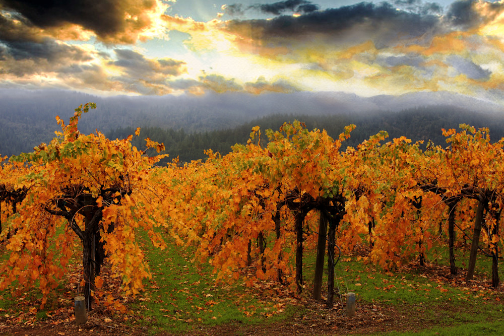 Fall Vineyard