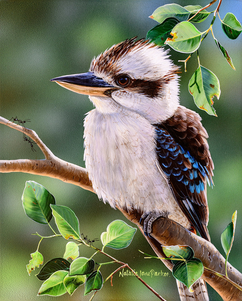 Out on a Limb - Laughing Kookaburra | Natalie Jane Parker | Australian Native Wildlife