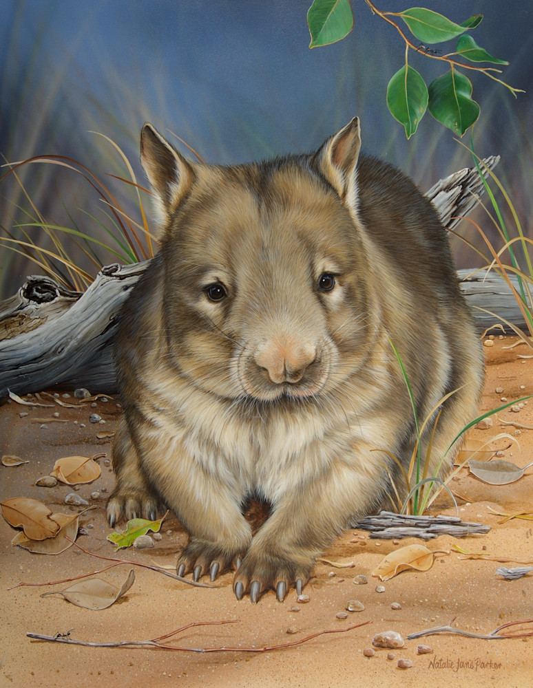 Moon Light Stroll - Northern Hairy Nosed Wombat | Natalie Jane Parker Australian Native Fauna