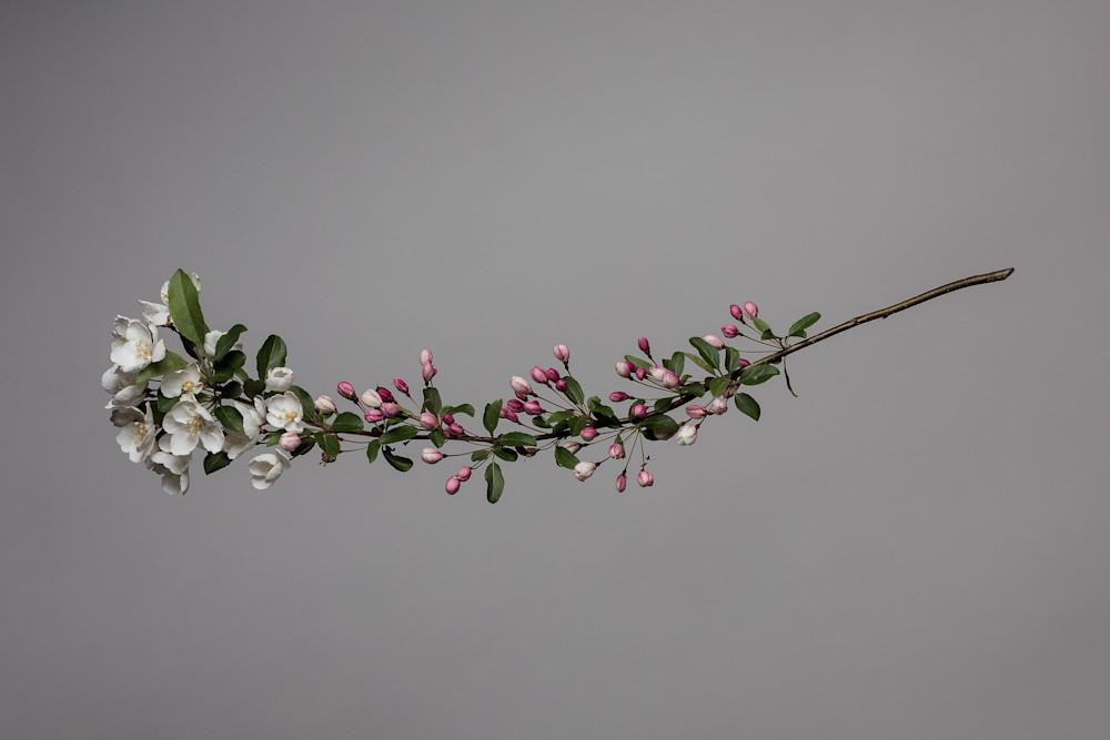 Spring Apple Blossom | Fine Art Photographs | Nathan Larson